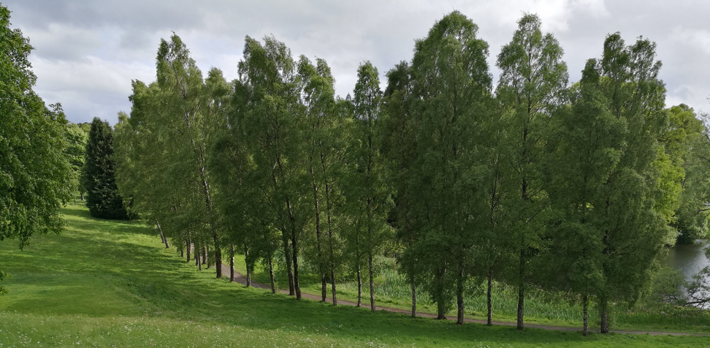 path through avenue of trees